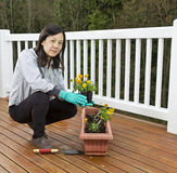 Planting Flowers for the Patio Stock Photos