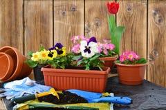 Planting flowers stock image