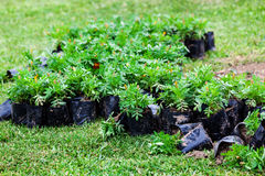 Planting flowers Stock Images