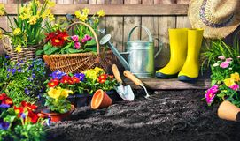 Planting flowers in sunny garden stock image