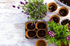 Planting flowers Stock Photos
