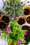 Planting flowers Royalty Free Stock Photo