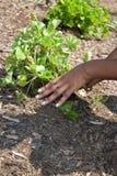 Planting the Garden Royalty Free Stock Photos