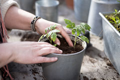 Planting in the garden Stock Images
