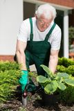 Planting in garden Stock Photo