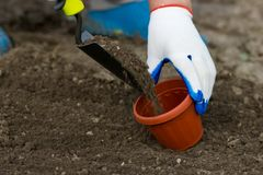 Planting in the garden. Gardener starts planting in the garden, close up photo stock image