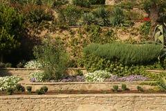 Planting of greenery Royalty Free Stock Photos