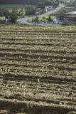Planting ground Royalty Free Stock Image