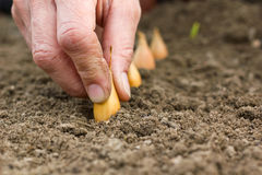 Planting Stock Photography