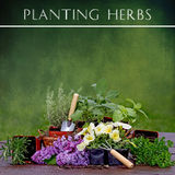 Planting Herbs Background Royalty Free Stock Photography