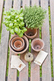Planting herbs Royalty Free Stock Photos