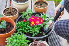Planting herbs and flowers Royalty Free Stock Image