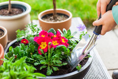 Planting herbs and flowers Stock Photos