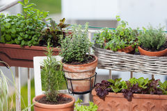 Planting herbs and vegetables Royalty Free Stock Photo