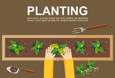 Planting illustration. Planting concept. Flat design illustration concepts for working, farming, harvesting, gardening, architectu Royalty Free Stock Photography