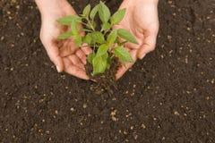Planting life Stock Photos