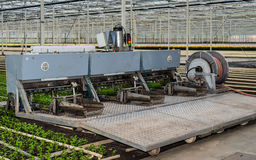 Planting machine in a chrysanthemum nursery. Transplanter for chrysanthemum cuttings is ready for the start of work in a specialized chrysanthemum nursery in a Royalty Free Stock Photos
