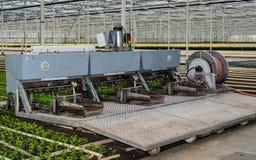 Planting machine in a chrysanthemum nursery Royalty Free Stock Photos