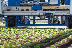 Planting machine in a greehouse. A sophisticated planting machine in a greenhouse in the Netherlands stock photography