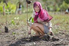 Planting mangrove tree Royalty Free Stock Photos