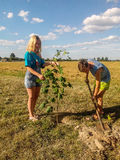 Planting maple trees on Saturday in the Gomel region of the Republic of Belarus. Royalty Free Stock Photos