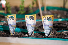 Planting money in Garden Bed Royalty Free Stock Image