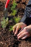 Planting a new forest. Men planting a tree for afforest Stock Image
