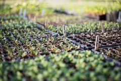 Planting For A New Garden 1. Photo of dozens of planting trays all containing different types of plants stock photo