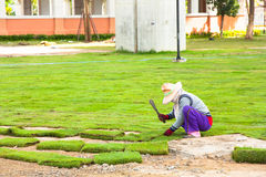 Planting New Grass Royalty Free Stock Photography