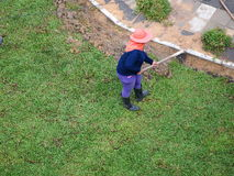 Planting new green grass Stock Image