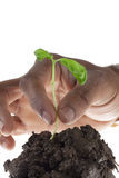 Planting new growth Stock Images