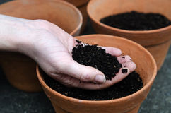 Planting new plants Royalty Free Stock Photo