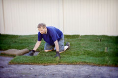 Planting New Sod Grass. A worker plants new sod grass in someone's landscaped backyard. Tilt Shift lens used royalty free stock photography