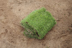 Planting new sod grass in the garden Royalty Free Stock Photo