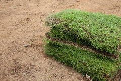 Planting new sod grass in the garden Stock Photography