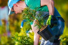 Planting New Trees. Gardener Buying New Plants For His Garden Project royalty free stock photos