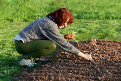 Planting onion Royalty Free Stock Photo