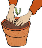 Planting. Pair of hands planting acorn seed Stock Photo