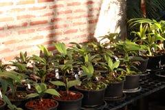 Planting palm batch stock image