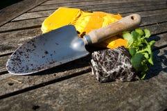 Planting Pansy Plugs Royalty Free Stock Photo