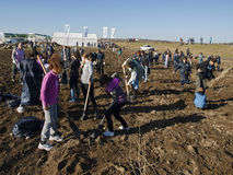 Planting Stock Image