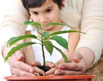 Planting a plant Stock Photos