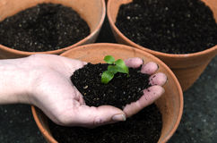 Planting a plant Stock Images