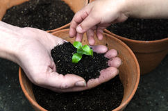 Planting a plant Stock Image