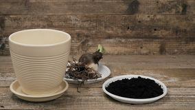 Substrate and drainage for planting a home plant