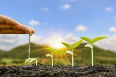 Free Planting Plants On Fertile Soil And Watering The Plants Including Displaying The Growth Stages Of Plants. Royalty Free Stock Image - 200203776