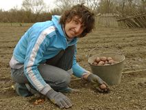 Planting potato Royalty Free Stock Image
