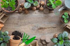 Planting potted flowers and equipment for pot plants. Copy space for text. Top view, flat lay. Several flowerpot of houseplant. Planting potted flowers and Royalty Free Stock Photography