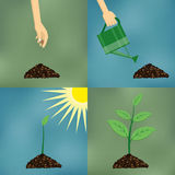 Planting process in flat design. Royalty Free Stock Image