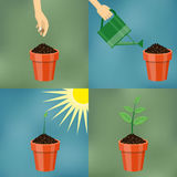 Planting process in flat design. Stock Photo